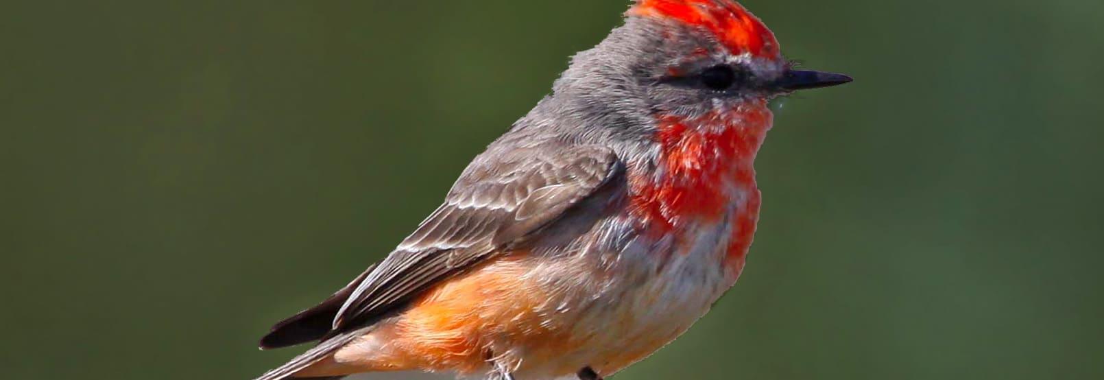 Bird Watching in Guanajuato